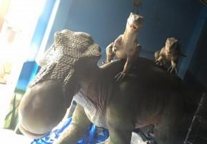 DINOSAUR_恐竜ライド